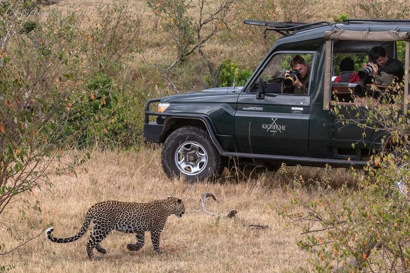 Leopard Fig Olare Motorogi Conservancy