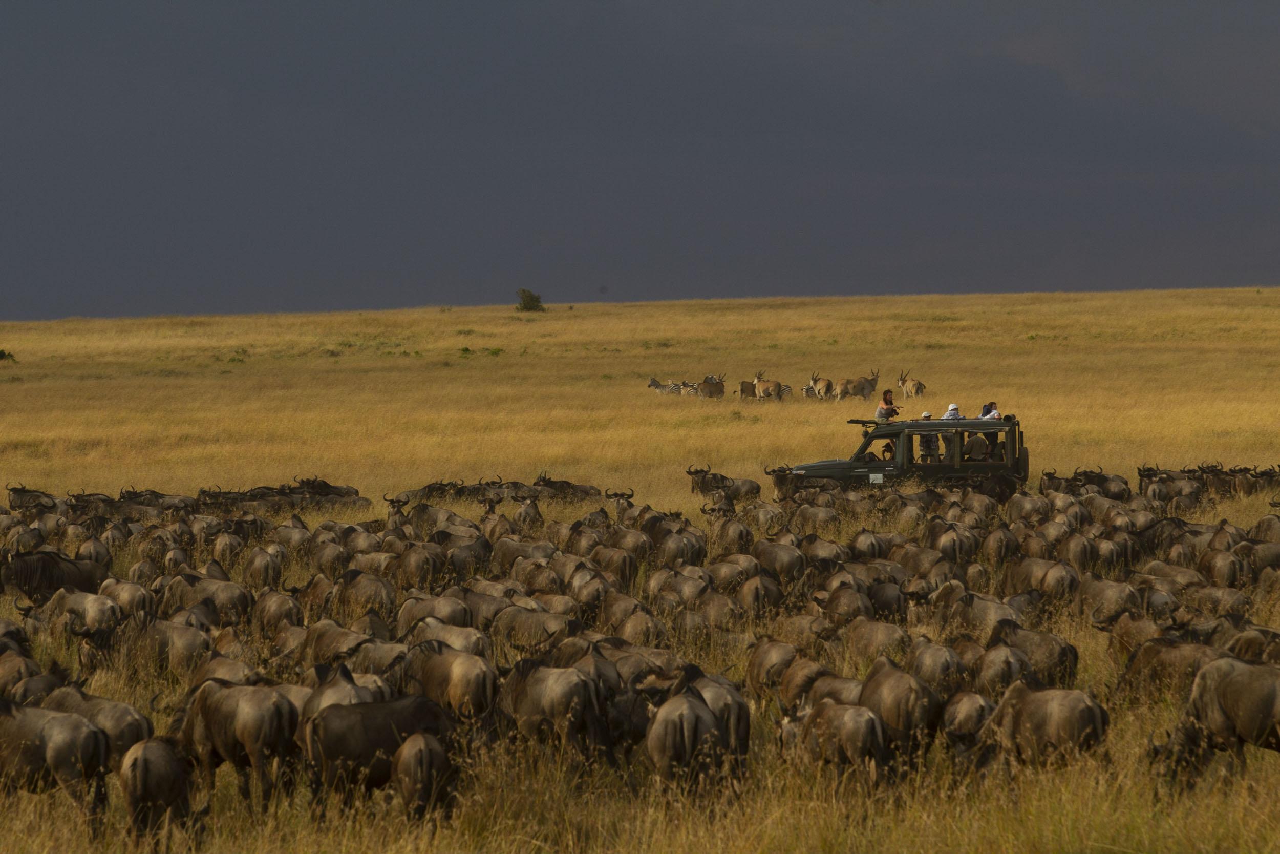 Herd Immunity.